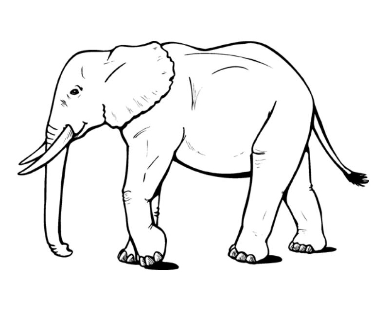 elephant-coloring-page.jpg